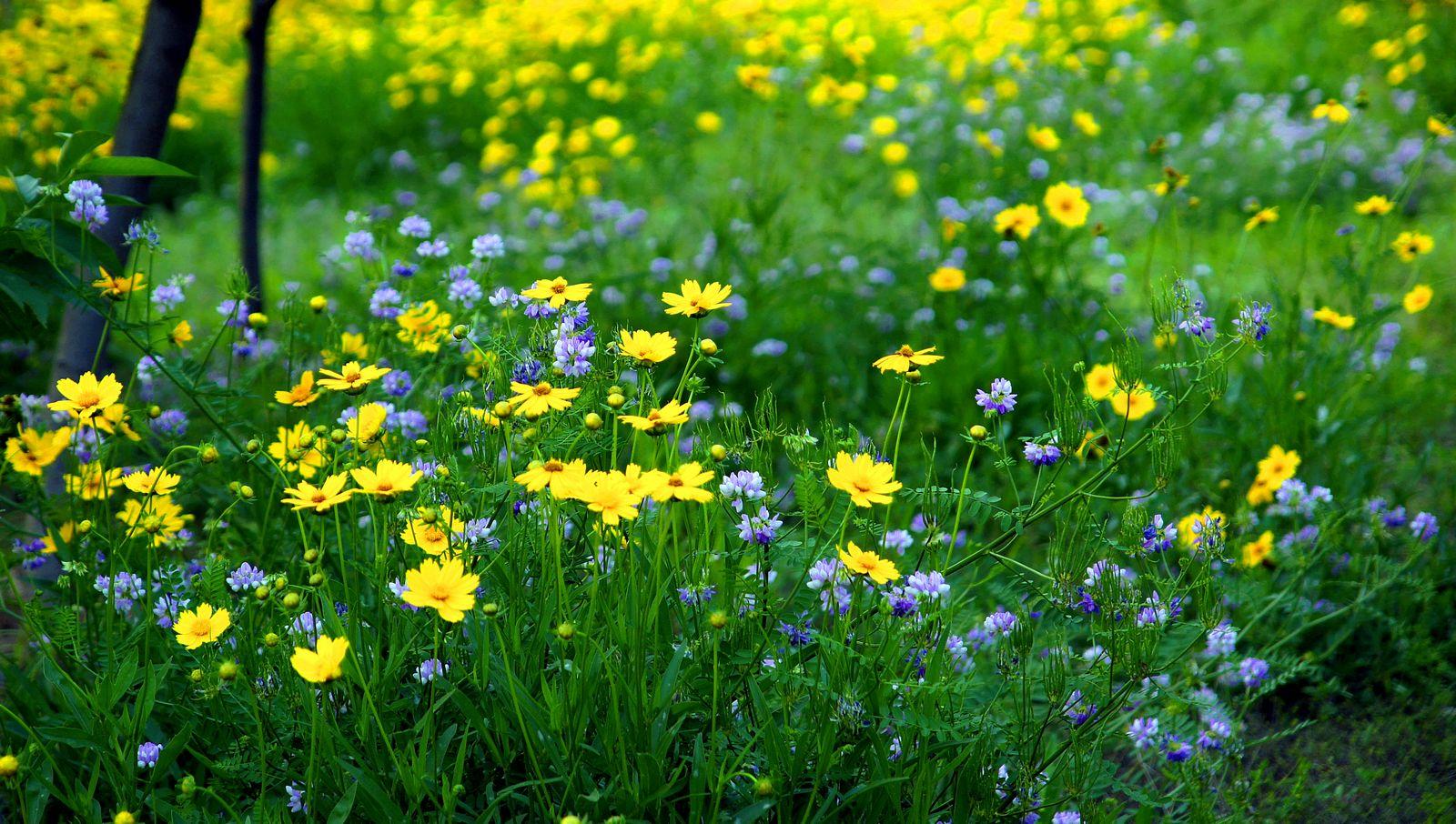 儿童图画春天的景色 小学生春天美景图画儿童图画春天的景高清图片